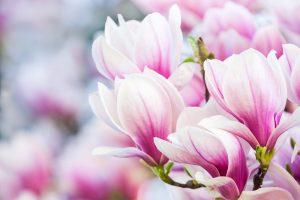 magnolijos_BSS IT