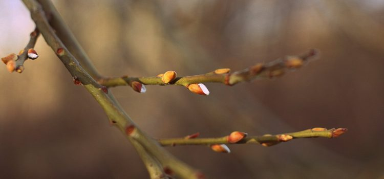 BSS pavasaris