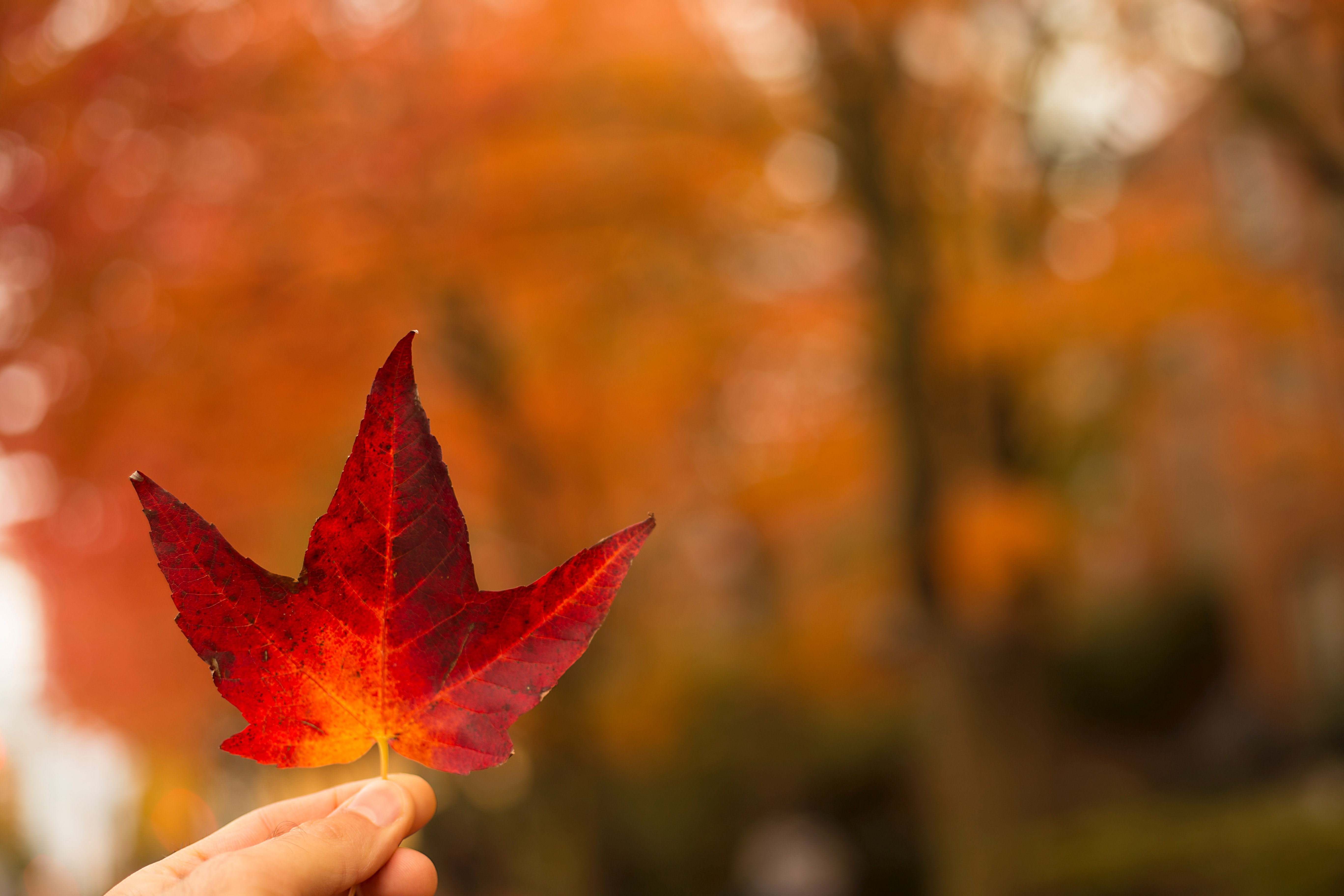 autumn-autumn-colours-autumn-leaf-211073