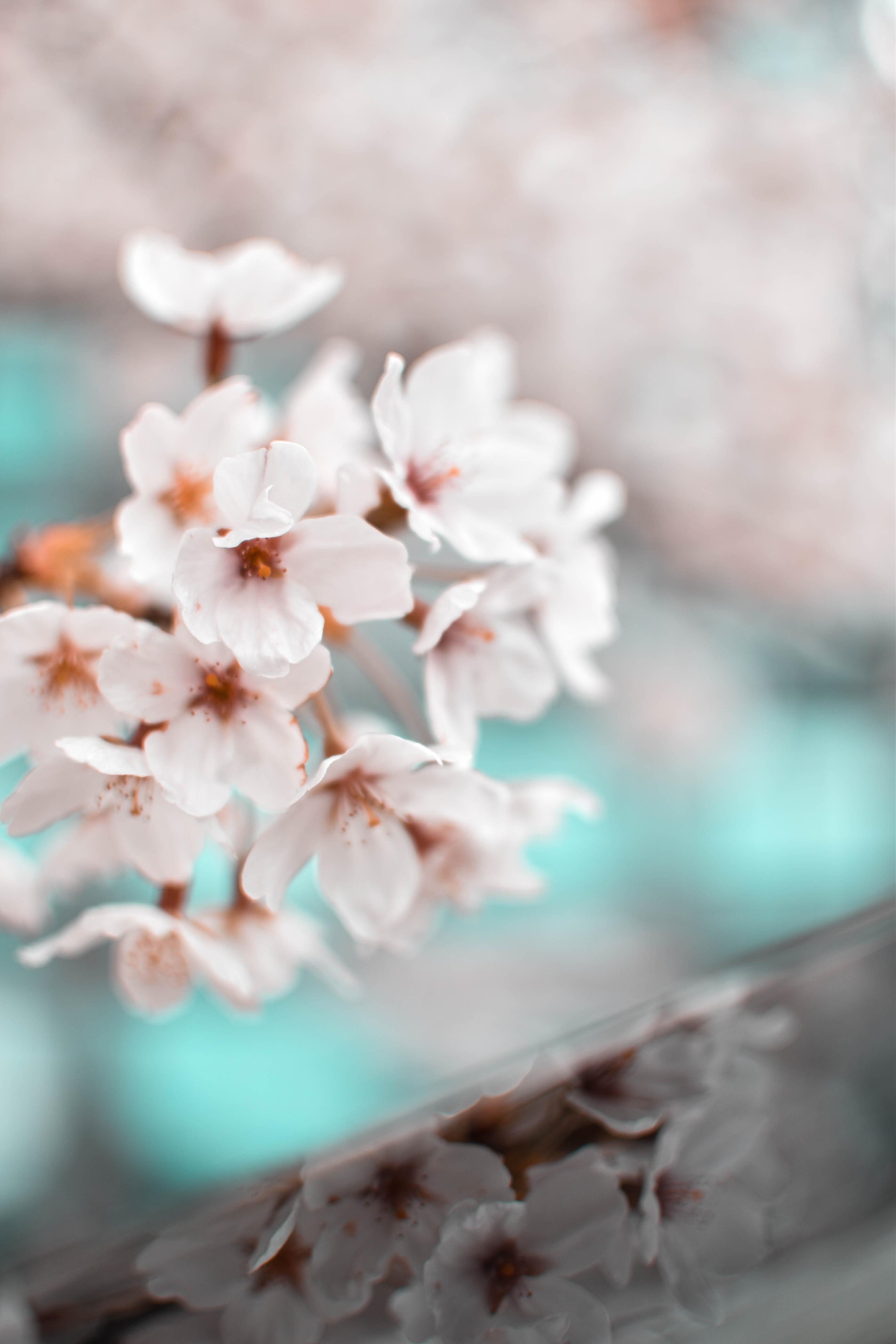 beautiful-bloom-blooming-2076494