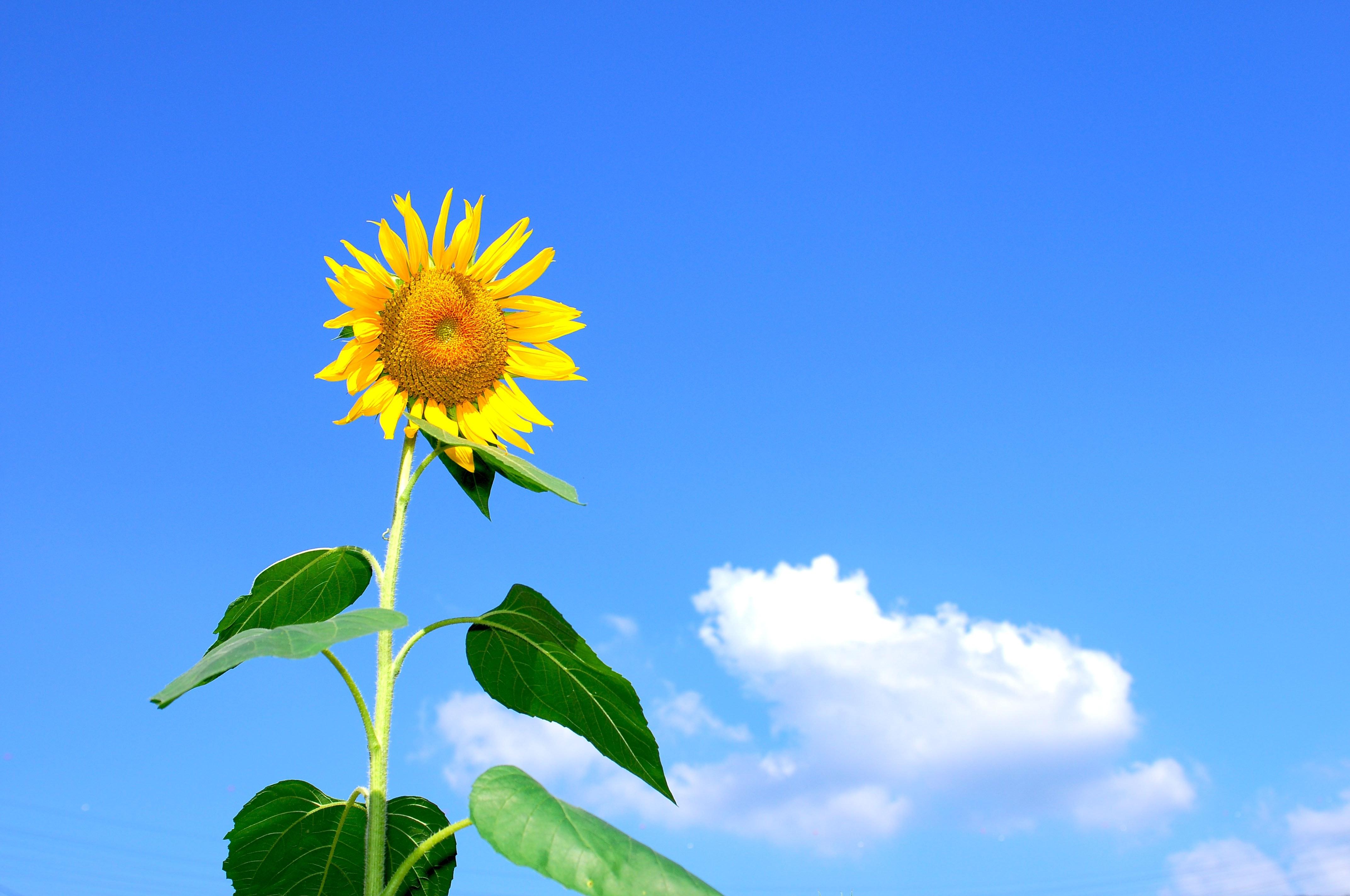 background-beautiful-bloom-54459