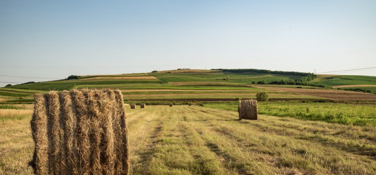 agriculture-countryside-cropland-2600222