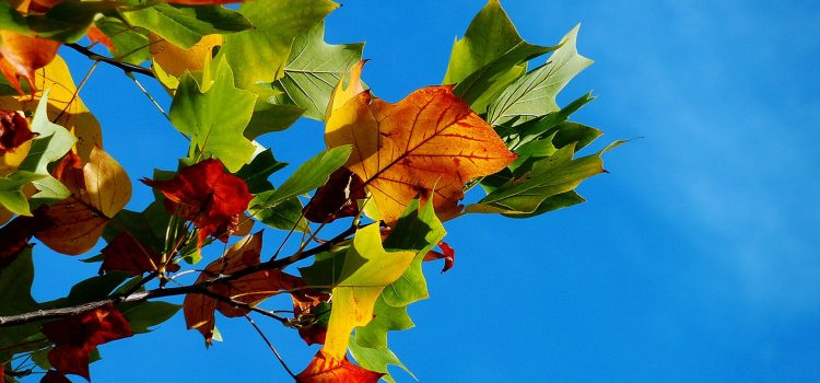 autumn-fall-leaves-leaves-fall-color