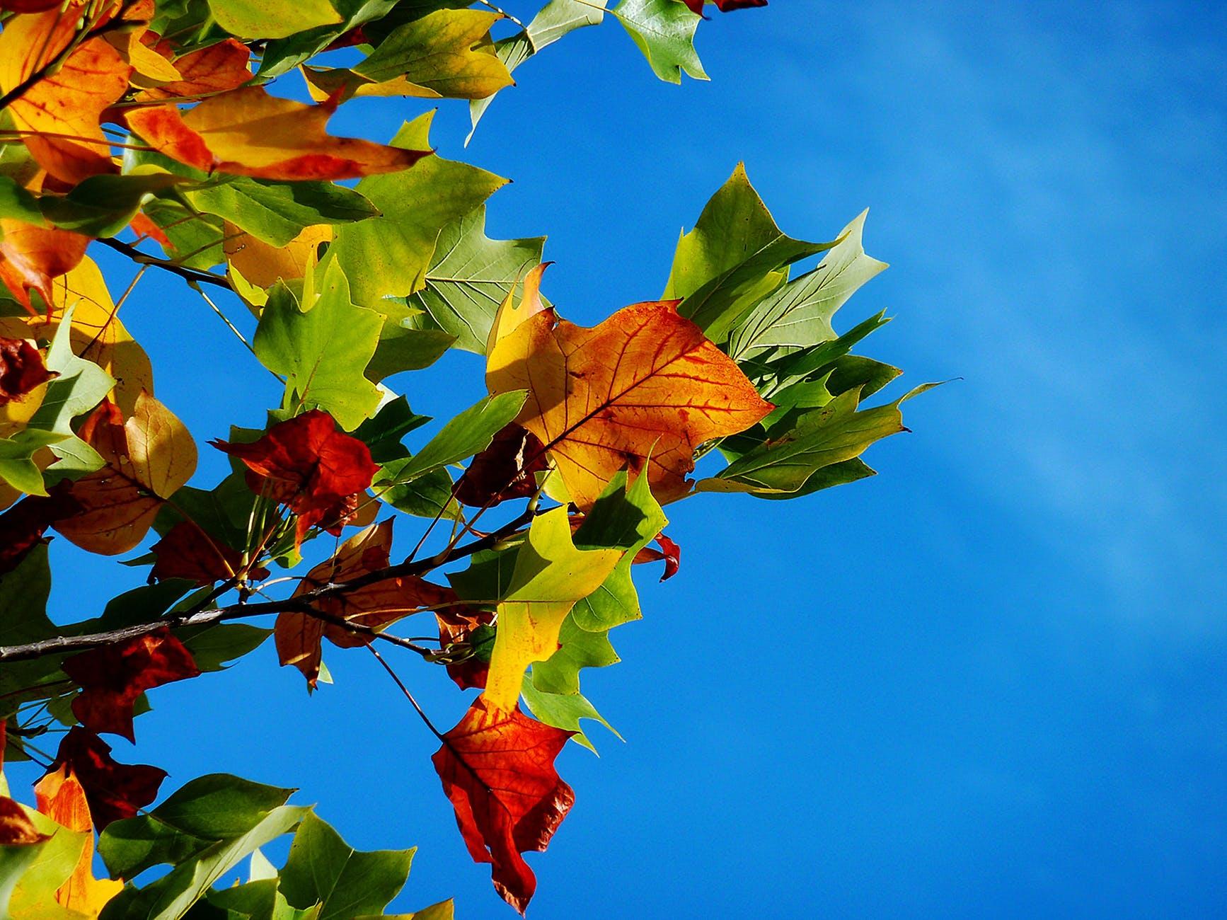 autumn-fall-leaves-leaves-fall-color